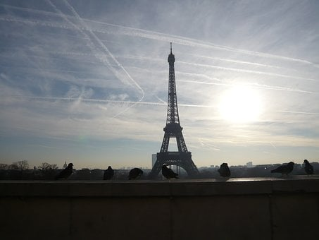 Paris, Eiffel Tower, Walk, Pigeons, Sunrise, Morning