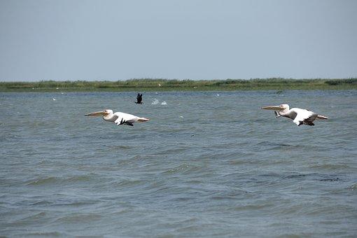 Wild, Nature, Wildlife, Danube Delta, Water, Exotic