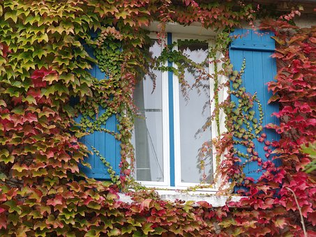 Autumn, Window, The Autumn Window, Wine, Fall Color