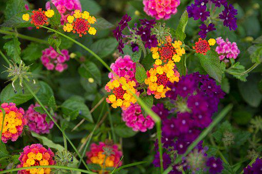 Yellow, Colorful Purple, Blue, Green Fall Flowers