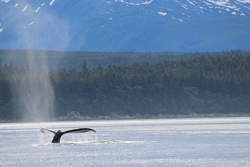 Whale, Tail, Alaska, Water, Nature