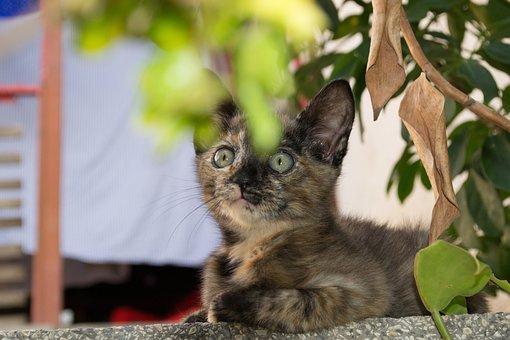 Cat, Gato, Animal, Kitty, Cute, Feline, Pet, Kitten