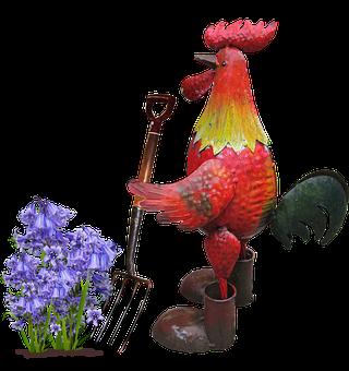 Rooster, Digging, Flower, Garden