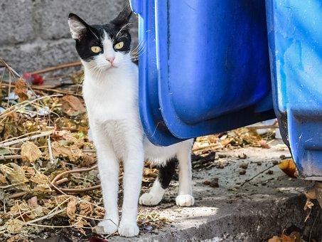 Cat, Stray, Tramp, Animal, Homeless, Street, Looking