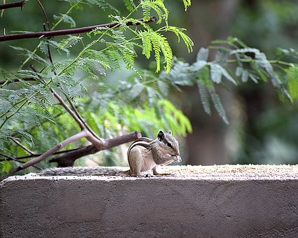 Squirrel, Animal, Nature, Wild, Natural, Wildlife, Farm