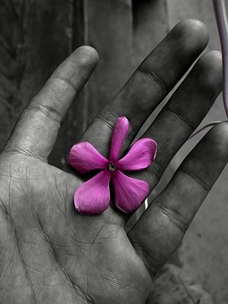 Flower, Black And White, Oilpain, White, Nature