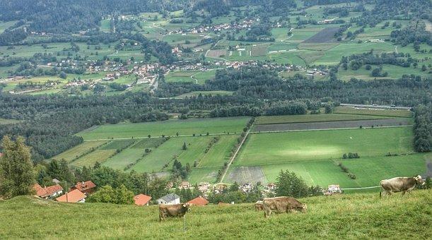 Panorama, Mountains, Alpine Cow, Landscape