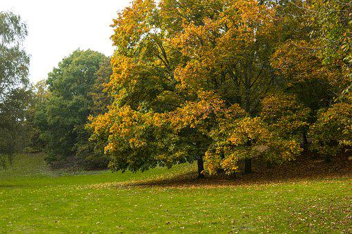 Autumn, Park, Germany, City, Chestnut, Nature