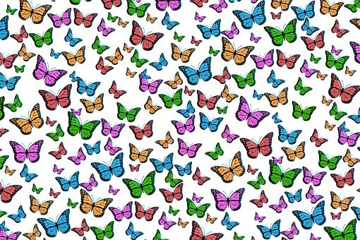 Butterflies, Colorful, Pattern, Texture, Structure