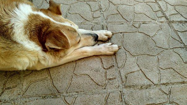 Photo, Dog, Resting, Concrete