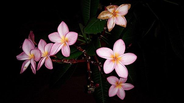 Porcelain Flower, Porcelain Flowers, Beautiful Flowers