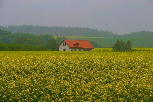 Rapeseed, Landscape, Spring, Cottage