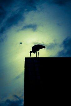 Stork, Twilight, Romantic, Silhouette, Abendstimmung
