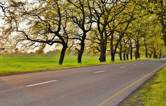 Tree, Landscape, Nature, Forest, Park, Green, Sky