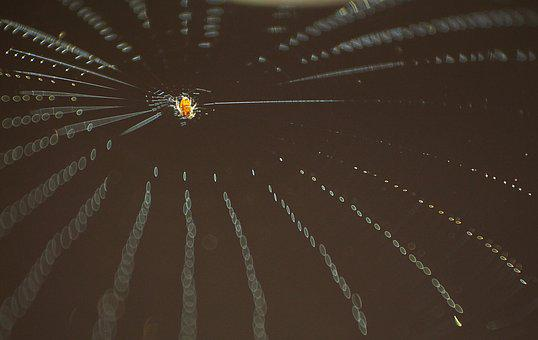 Spider Web, Insect, Socket