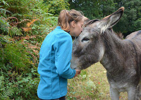 Kiss, Donkey, Girl, Young Woman, Tenderness, Affection