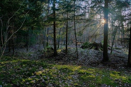 Forest, Light, Tree, Nature, Landscape, The Sun