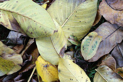 Leaves, Autumn, Transience, Discoloration