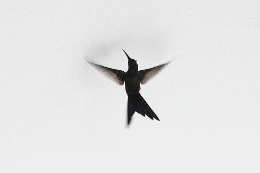 Bird, Beija-flor, Ave