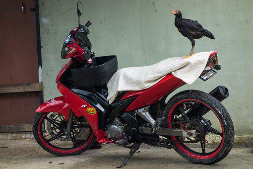 Village, Chicken, Bike, Motorbike, Red, Black, Bird