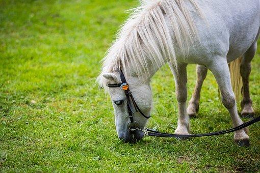 Horse, Pony, Small Horse, Highland Pony, Mold