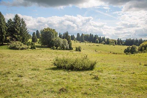 Swabian Alb, Juniper, Landscape, Alb Eaves, Alb