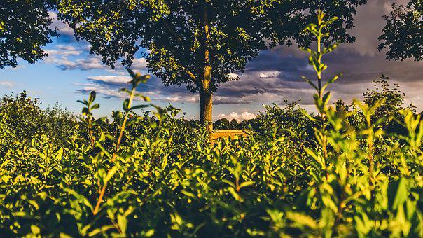 Hedge, View, Green, Summer, Landscape