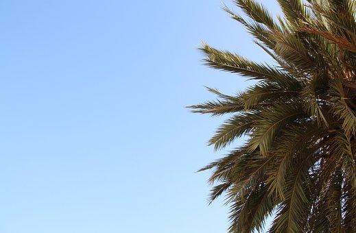 Palm, Sky, Partly Cloudy, Summer, Holiday, Blue Sky
