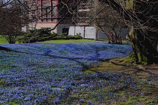 Spring, Flowers, Landscape, Park, Blue, Blue Lawn