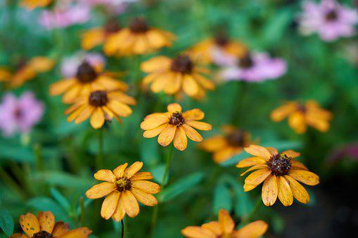 Flower, Daisy, Beautiful, Nature, Flowers, Plant