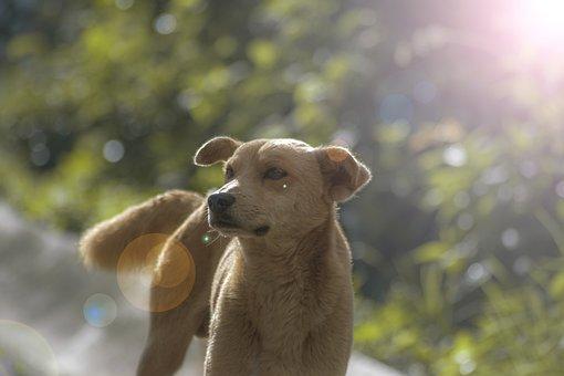 Pet, Dog, Sun, Animals, Dogs Playing, Profile Dog, Ray
