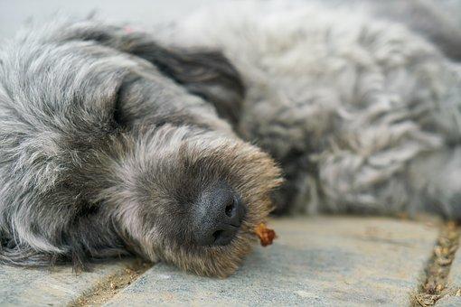 Dog, Sleep, Grey, Animal, Street, Feather, Asleep