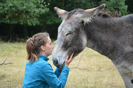Donkey, Girl, Young Woman, Complicity, Tenderness