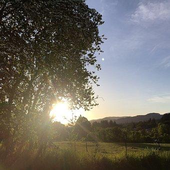 Field, Sunshine, Tree, Green, Nature, Outdoor