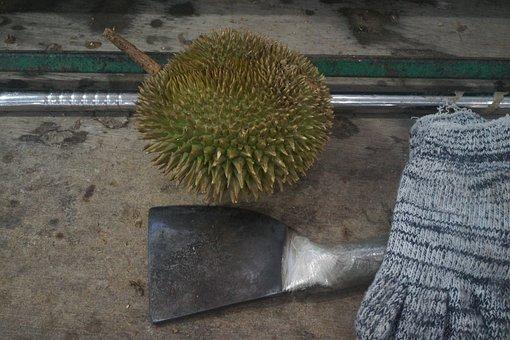Durian Chopper, Durian Fruit, King Of Fruits, Tropical