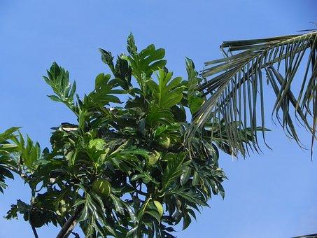 West Indies, Trees, Caribbean, Leaves, Tropics