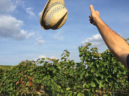 Hat, Vineyard, Autumn, Harvest, Male, Course, Green
