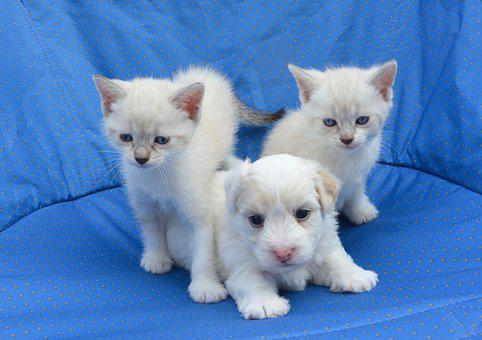 Puppy, Cats, Dogs Kittens, Dog Cat, Tenderness
