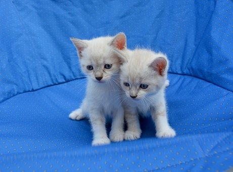 Kittens, Cats, Hug, Tenderness, Complicity, Love