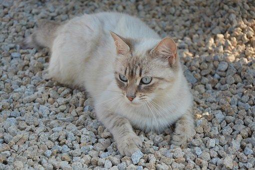 Cat, Pussy, Lengthen, Domestic Animal, Feline