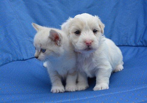 Kitten Puppy, Puppy Kitten, Dog Cat, Complicity, Small