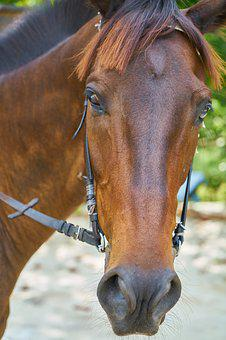 Horse, Animal, Nature, The Horses Are, Cute, Nose