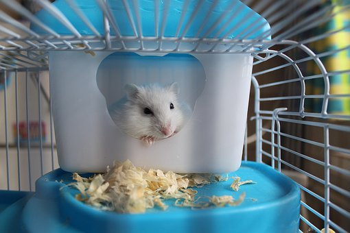 Hamster, Rodent, Cage, Pet, Muzzles, Mammal, Favorite