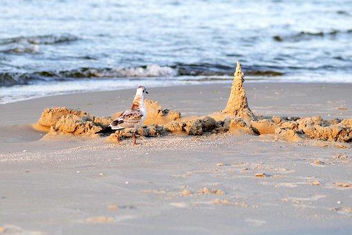 Seagull, White, Bird, Sea, Castle, Water, Beach, Sand