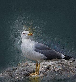 Seagull, Bird, Sea, Cormorant, Blue, Nature, Summer