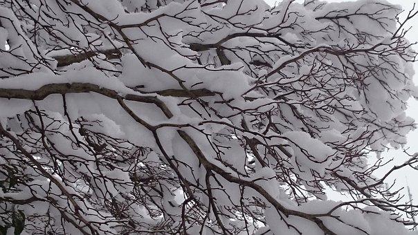 Winter, Snow, Tree, White, Fluff, Beautiful
