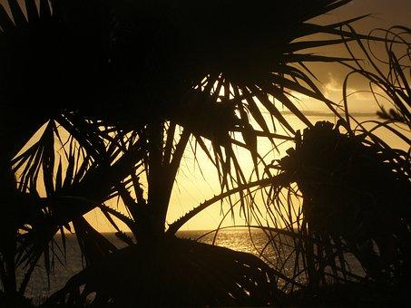 Sun, Nature, Sunset, Beach, Landscape, Water, Sky