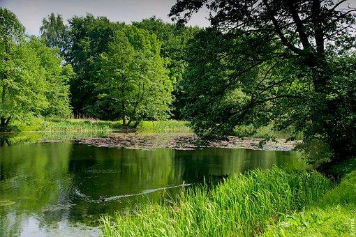Summer, Pierzarz, Green, Lake, Forest, Nature, Water