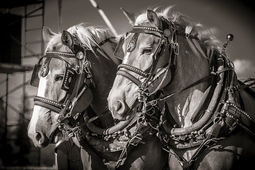 Horse, Heavy, Work, Tough, Horsepower, Harness, Pull