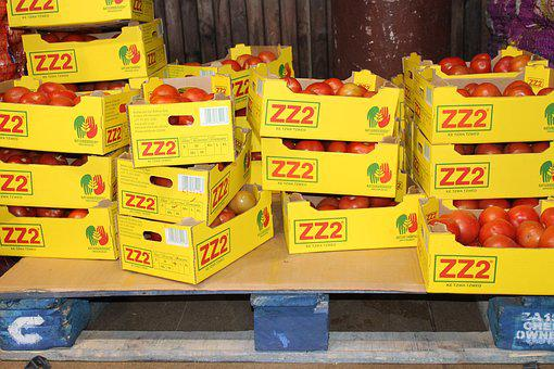 Food, Wood Pallets, Industry, Wholesale, Boxed Tomatoes